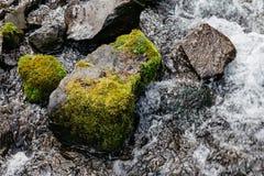 关闭石头用青苔和自然水在Fukidashi公园在北海道,日本 免版税库存图片