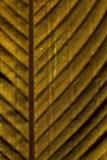 关闭自然秋叶的摘要 免版税库存图片