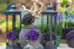 关闭称在花盆机智的风轮草的小会开蓝色钟形花的草 免版税库存图片