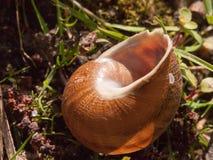 关闭空的蜗牛壳外面在地面棕色det 库存照片