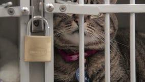 关闭笼中的猫 股票视频