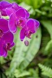 关闭紫色兰花 免版税库存图片