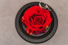 关闭红色玫瑰 免版税库存图片