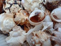 关闭组合与纹理的海壳 背景背景蜡染布手册褐色圆的设计桌面例证邀请介绍树荫棕褐色二使用墙纸网站 库存图片
