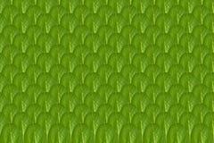 关闭绿色叶子样式背景照片 免版税库存照片
