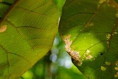 关闭绿色叶子纹理在与光束斑点的自然光,领域浅dept和bokeh下 库存照片