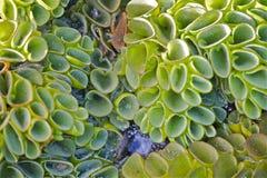 关闭绿色水厂,与蜘蛛网的小水滴,干燥叶子 免版税库存图片