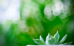关闭美丽的多汁植物选择聚焦与绿色bokeh的 库存照片