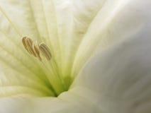 关闭美丽的白色开花13 库存照片