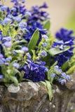 关闭美好的五颜六色的会开蓝色钟形花的草和勿忘草flowe 免版税库存图片