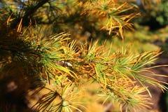 关闭美好的秋天五颜六色的棕色黄绿色植物 免版税库存照片