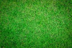 关闭美好的绿草样式背景  图库摄影