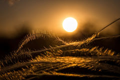 关闭美妙的日落光的stipa植物 免版税图库摄影