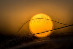 关闭美妙的日落光的stipa植物 库存图片
