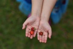 关闭草莓的图象在女孩手上的 库存照片