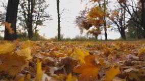 关闭落在地面的黄色秋天叶子在空的森林草坪用在公园的落叶掩盖 股票视频