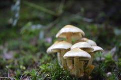 关闭蘑菇 库存照片