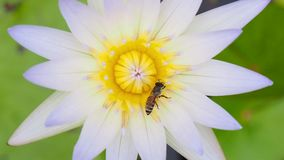 关闭蜂和白莲教 影视素材