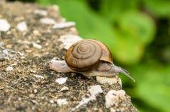 关闭蜗牛 库存照片