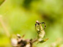 关闭蜘蛛的宏指令在有腿和身体的一片叶子顶部我 库存照片