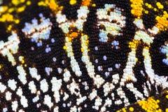 关闭被修宝石的变色蜥蜴 免版税库存照片