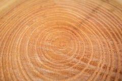 关闭被切开的树干木纹理  库存图片