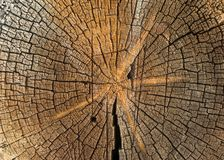 关闭被裁减的纹理树干  免版税库存照片