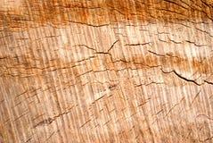 关闭被裁减的纹理树干  免版税库存图片