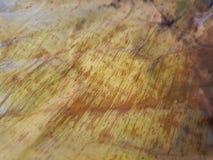 关闭被隔绝的干燥香蕉叶子 库存图片