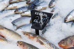 关闭观点的与价牌的一条冻梭鱼鱼在超级市场社论柜台  免版税库存照片