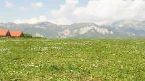 关闭观点的春黄菊在多山阿尔卑斯地区,与一个遥远的小村庄 非都市区域 没有人民 股票录像