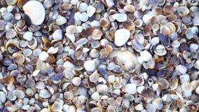 关闭许多不同的混杂的五颜六色的贝壳作为背景 各种各样的珊瑚、海洋软体动物和扇贝壳 股票视频