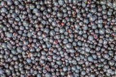 关闭许多水多的蓝莓 免版税库存照片