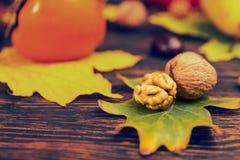 关闭说谎在树叶子,作为backgr的秋天收获的核桃 图库摄影