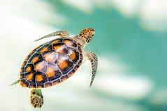 关闭逗人喜爱的乌龟 免版税图库摄影
