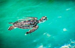 关闭逗人喜爱的乌龟 库存照片