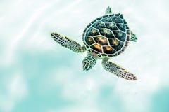 关闭逗人喜爱的乌龟 免版税库存照片