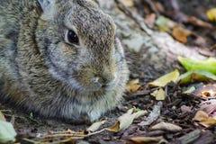 关闭逗人喜爱的小兔 免版税库存照片