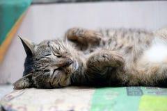 关闭逗人喜爱的睡觉猫 免版税库存图片