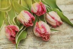 关闭郁金香花桃红色新鲜的春天花束在土气灰色木背景的与拷贝空间 春天…上升了叶子,自然本底 库存图片
