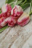 关闭郁金香花桃红色新鲜的春天花束在土气灰色木背景的与拷贝空间 春天…上升了叶子,自然本底 免版税库存图片