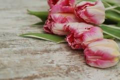 关闭郁金香花桃红色新鲜的春天花束在土气灰色木背景的与拷贝空间 春天…上升了叶子,自然本底 免版税图库摄影