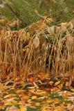 关闭雏菊和下落的杏子叶子在秋天 免版税库存图片