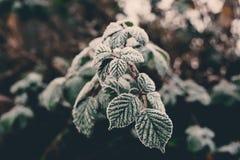 关闭霜射击在叶子的在一个冷的有雾的12月早晨在伦敦,英国 免版税库存照片