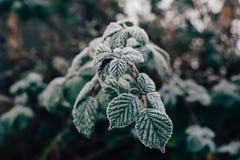 关闭霜射击在叶子的在一个冷的有雾的12月早晨在伦敦,英国 免版税图库摄影