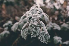 关闭霜射击在叶子的在一个冷的有雾的12月早晨在伦敦,英国 免版税库存图片