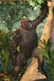 关闭非洲人被充塞的大猩猩 免版税库存图片
