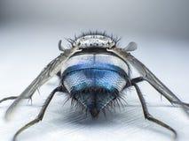 关闭飞行,宏指令,大飞行,妖怪昆虫,后面看法 图库摄影