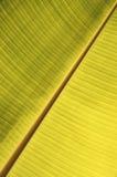 关闭香蕉叶子结构 免版税库存照片