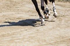 关闭马在乘坐围绕ob的竞争比赛期间 免版税库存图片